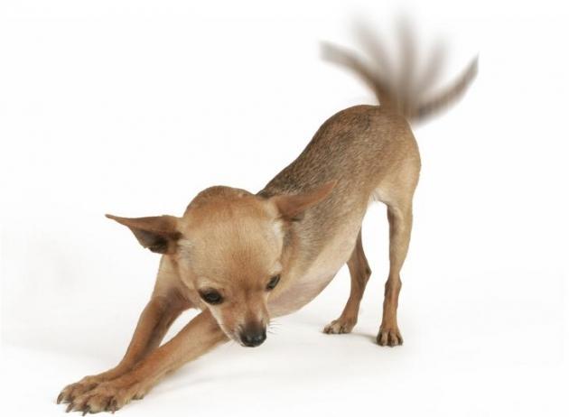 Perros animados corriendo con movimiento - Imagui